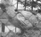 dodo footage